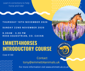 Emmett 4 Horses – Introductory Course