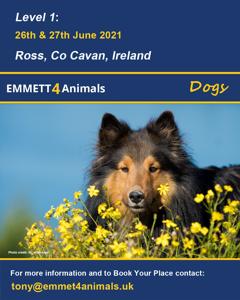 Emmett 4 Animals - Dogs June 2021