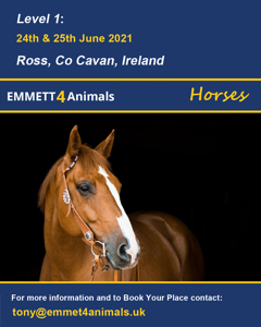 Emmett 4 Animals - Horses June 2021